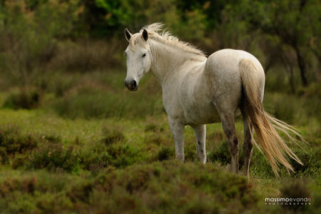 2013- 05-   14691 Camargue-cavallo