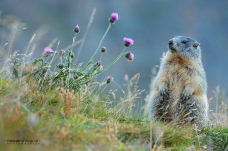 2014- 09-   00010 Marmotta