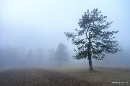 2016--01-- MAX1387----A-Foggy-Day